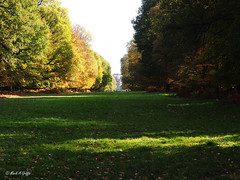 the ride (mark.griffin52) Tags: olympusem5 england hertfordshire ashridgeestate autumn ride landscape