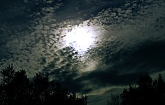 Cielo emborregado (portalealba) Tags: zaragoza zaragozaparque aragon españa spain nubes portalealba pentax pentaxk50 nwn 1001nights 1001nightsmagiccity contactgroups