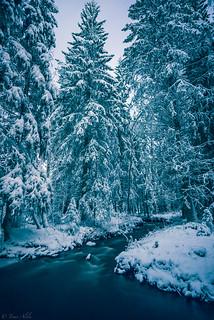 Snowy forest near Pihlajakankaantie