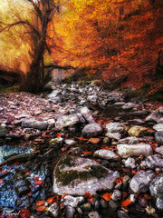 Magic Forest (tmuriel67) Tags: faedodeciñera hayedo autumn otoño colours rocas rocks trees forest bosque leaves woods red nature outdoors hayas paisaje