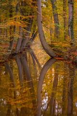 Autumn reflections (Mario Visser) Tags: xt2 autumn color curves fuji fujifilm herfst landscape mariovisser nature orange tree twickel water