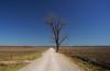 Athwart the Way (oldoinyo) Tags: landscape scenic rural missouri autumn highway79