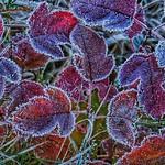 Frosty Morn thumbnail