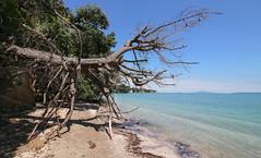 Shoreline Tree (Andy.Gocher) Tags: andygocher canon100d newzealand beachlands beach coast coastline sand water bluesky trees tree shore