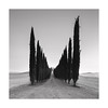 |||llliilll||| (Nick green2012) Tags: tuscany trees avenue landscape square blackandwhite illume