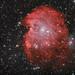The Monkey Head Nebula - NGC2175