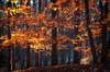 November (☺dannicamra☺) Tags: nikon d5100 germany bavaria forest autumn fall november tree woods leaves nature landscape bayern wald herbst natur baum blätter landschaft laub orange yellow gelb smileonsaturday vividorange