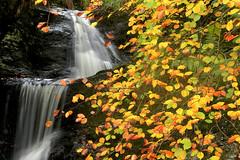 Balgerri (josuneetxebarriaesparta) Tags: balgeri karrantza bizkaia paísvasco euskadi basquecountry udazkena otoño autumn urjauzia cascada waterfall hayedo pagadia