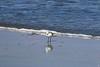IMG_3291 (SweetMeow) Tags: harborisland sthelenaisland ocean beach cameraclub sanderling