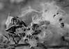 PIC_0032_01 (mujetdebois) Tags: черноеибелое monochrome istillshootfilm filmisnotdead blackandwhitephotography biancoenero analogphotography 35mm canonelan100 ilfordfp4125 filmlives filmphotography negroyblanco noirblanc schwarzundweis shootfilmstaybroke morrisarboretum