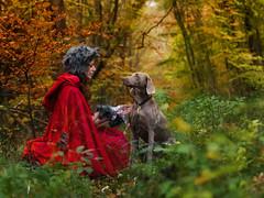 Frauchen, warum hast du so grosse Ohren? Mistress..what big ears you have! (pipe notjustaphoto) Tags: wolf dog weimaraner jagdhund forest autumn fairytale fantasy costume little red riding hood