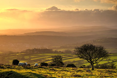 Late afternoon on Dartmoor (Explored) (Baz Richardson (trying to catch up!)) Tags: devon dartmoor horrabridge sunset sheep stmaryschurchwalkhampton explored