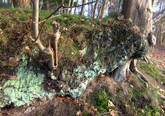 Mint green (herman hengelo) Tags: recreatie hethulsbeek oldenzaal mos moss thenetherlands autumn herfst