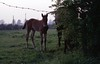 img007 (foundin_a_attic) Tags: horse 1970s hourse