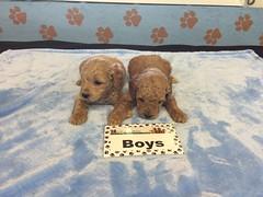 11-26 Roxie Boys_Pic 4