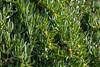 DSC_0090 (MoJo0103) Tags: italien italy italia puglia apulien gargano peschici