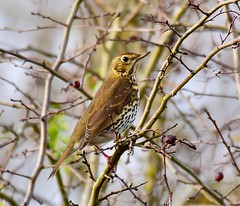 - Taken at Titchmarsh Nature Reserve, Aldwincle, Northants. UK (Ian J Hicks) Tags: