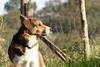 Nyx (Jérôme_M) Tags: canon eos 600d chien dog sigma aquitaine landes seignanx nyx