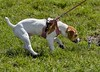Approach With Caution (swong95765) Tags: dog canine animal cute encounter leash brakes
