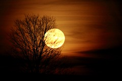 Full Moon (parrotlady66..) Tags: moon night canon70d fullmoon tree silhouette