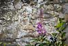 Jackson Hole 1707-1213.jpg (DevonshireMedia) Tags: wyoming jacksonhole travel 2017 grandtetons tetons mountainplants plants flowers
