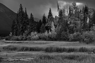 Marshland and Some Colorful Trees Along the Shores of Vermillion Trees (Black & White, Banff National Park)