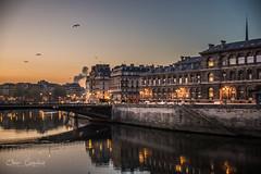 Paris, Hotel-Dieu, FR (Capistou) Tags: aube morning oliviercappeliez nikond750 tamron paris hôteldieu matin laseine quaidelacorse pontdarcole oiseaux birds reflections reflets