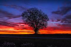 IMG_8740 (stan photographies) Tags: tree treeoflife nature naturephotography landscape landscapephotography sunset sunsetcolors sunsetcollection alone serenity forest majestic fairy naturecollection