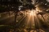Sun rays (Mike_Y_Wong) Tags: usa oregon coast coastline pacific city beach forest mist fog pacificcity sun sunrays foggy atmosphere northwest