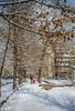 back to winter (stevefge) Tags: winter snow sneeuw trees bomen park asia kyrgyzstan bishkek people candid family street reflectyourworld