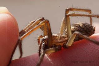 Spider on my fingertips (4069)