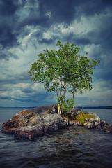The Island (Topolino70) Tags: nikon d60 island saari lake järvi tree puu birch koivu cloud pilvi sky taivas