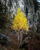 Autumn Solitude (Gr@vity) Tags: autumn herbst herbstfärbung birke fränkischeschweiz mountain 5dsr canon dof
