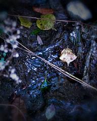 Spindly Brook in October / Risseau fatigué en octobre (H - - J) Tags: brook stream october fall autumn leaves leaf water stone symbol symbolic porthope ganaraska