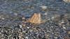 Plage de Bar Harbor, Maine, USA - 3229 (rivai56) Tags: barharbor maine usa sonyphotographing étatsunis us