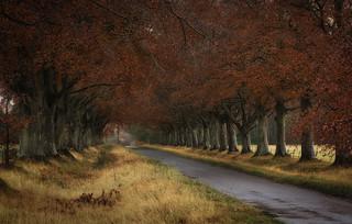 Stormontfield Beech