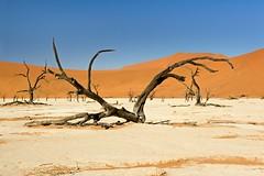 Deadvlei with Tree (aivar.mikko) Tags: tree trees deadvlei sossusvlei namibnaukluftnationalpark desert dunes namibia white clay pan salt namibnaukluft national park namib naukluft namibian desertlandscapes southafrica southafrican south africa african namibianlandsacapes landscape landscapes africanlandscapes scenic view dead vlei