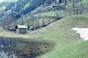 Alpine. Sedgy pool & snow. Rauris (Mary Gillham Archive Project) Tags: 1965 5223 april1965 austria landscape planttree rauris sedge snowice