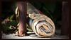 suburban newspaper (Leonard J Matthews) Tags: newspaper roll urban suburban paper mythoto australia