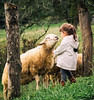 Give me a kiss, pleeeee-e-e-ase (Bai R.) Tags: funny sheep kiss arriondas asturias girl green love laugh smile