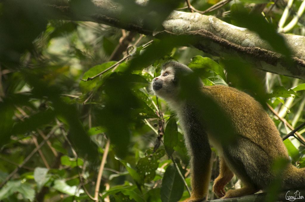 Monkey Island Ecuador