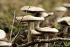 Flourishing Fungus (Gary L. Quay) Tags: hood river oregon mosier twin tunnels trail hcrh historic columbia highway nikon d810 macro nature mushroom fungus toadstool