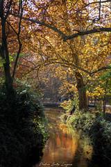 Fuentes del Marques_ 26112017-127-Editar (Pyass2015) Tags: caravaca fuentesdelmarques bosque forrest landscape parque murcia autum otoño