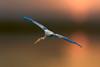Natural painting... (chandra.nitin) Tags: animal bif bird nature outdoor paintedstork wildlife newdelhi delhi india sundaylights