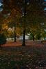 Alba lungo lago 16.10.17-5330 (Maurizio Piazzai) Tags: alba arona castellodiangera alberi lungolago