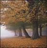 autumn (steve-jack) Tags: hasselblad 501cm velvia expired 80mm cb autumn fall fuji hornbeam 50
