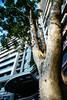 空間 ∣ 竹風青塘 (彙朗) Tags: taiwan taoyuan city interior interiorphotography architecture light atmosphere plants tree green 台灣 桃園 城市 空間設計 室內攝影 建築攝影 空間攝影 建築 光 氛圍 植物 樹 綠 台湾 シティ インテリア インテリア写真 雰囲気 木 緑 lightwax 光蠟樹 ライトワックス