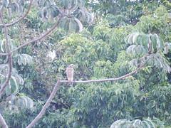 DSCN2548 (Caroline Campagni) Tags: pantanal unesp rio claro carol campagni biologia bióloga savana estépica