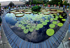 Panorama 3445_blended_fused (bruhinb) Tags: panorama hdr longwood kennettsquare pa usa longwoodgardens waterlilies