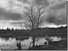 LAKE ROSEBURG OREGON (jawadn_99) Tags: explore tranquil quiet calm serene sober static peaceful sutherlin oregon usa park lake birds water trees reflections interrestingness clouds back white fallseason